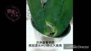 【雲妮手工皂】蘆薈入皂處理方法