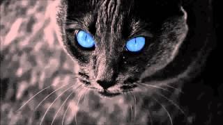 Die to born - Ballada o czarnym kocie