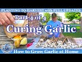 How to Grow Fall Garlic (Part 4 of 4) - How to Cure for long term storage