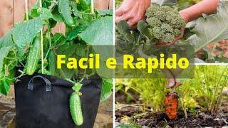 10 Vegetais Fácil de Cultivar e Produz Rápido