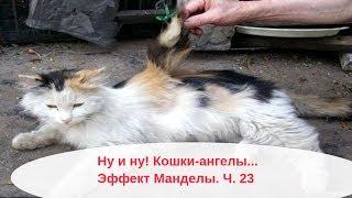 Кошки-ангелы и усатые лошади! Новости Эффекта Манделы . Мандельские животные. Ч 23