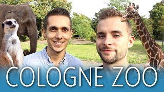 COLOGNE ZOO feeding animals HIGHLIGHTS 🐵🐧🐘 Cologne City