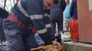 СПАС СОБАКУ Люди спасают животных Добрые поступки людей ТОП 3