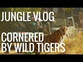 JUNGLE VLOG - PART 3/3 - Cornered by Wild Tigers
