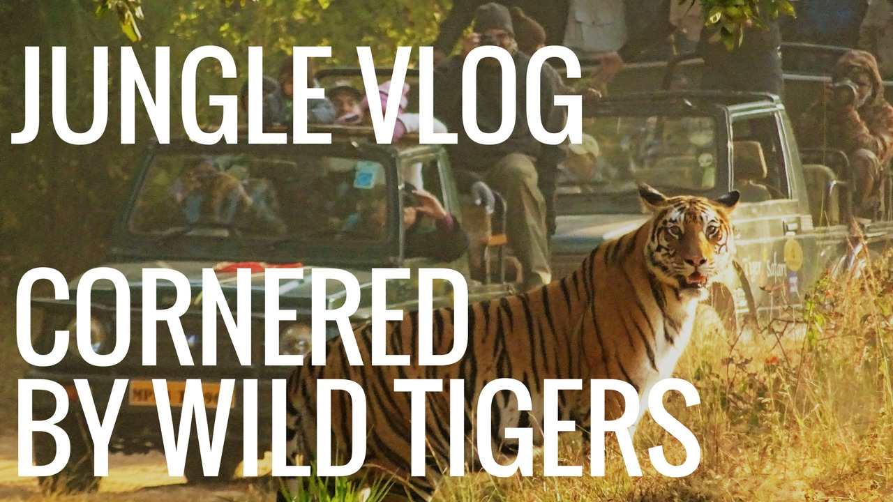 Best Tiger Safari Zone in Bandhavgarh National Park | Part 3/3