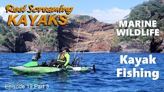 Discover offshore island wildlife and marine encounters - RSK Ep19 Part 3