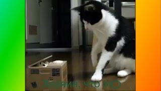 Смешное Видео о животных.Прикольное видео. Для детей. и не только Создай себе хорошее настроение