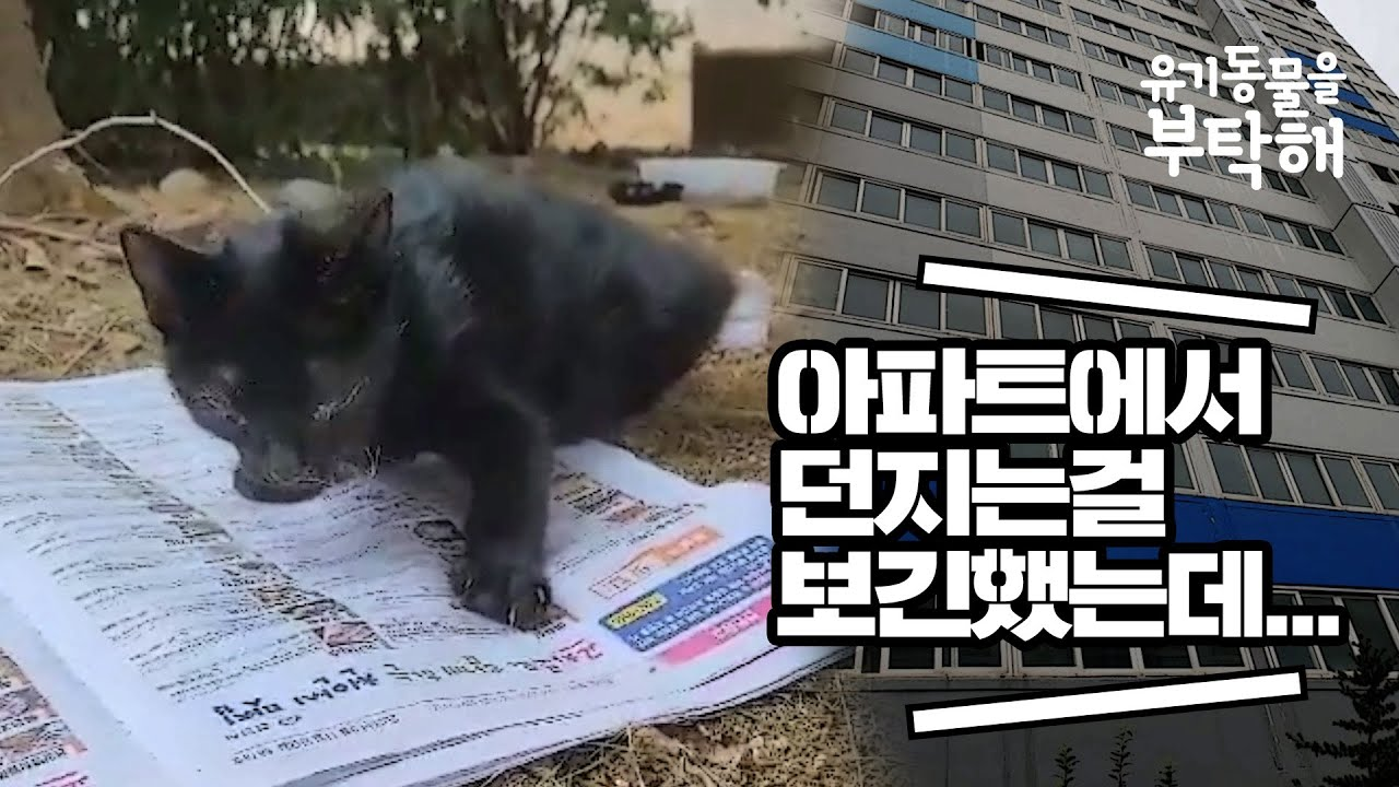 아파트에서 떨어졌지만 기적처럼 살아난 새끼 고양이