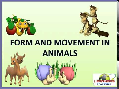 6 Sci Form and Movement in Animals TS 1 - YouTube