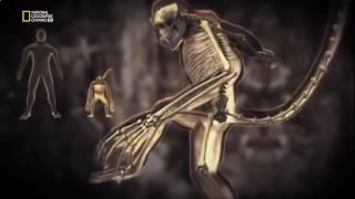 Дикие джунгли  Хищники и жертвы  Мир животных  National Geographic Mir Okolo2796
