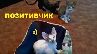 ✅ Котята девон-рекс/2 минуты позитива