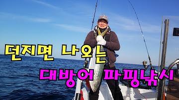 2018.11.30 강원도 동해 방어낚시 돼지방어!!!