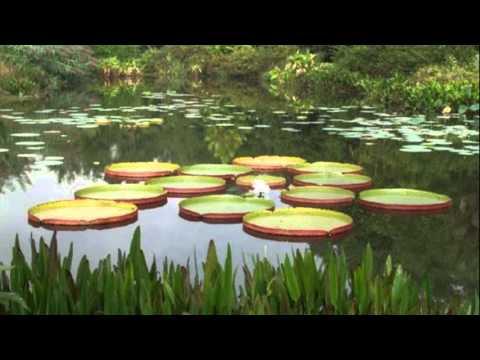 Kanapaha Botanical Gardens   Gainesville