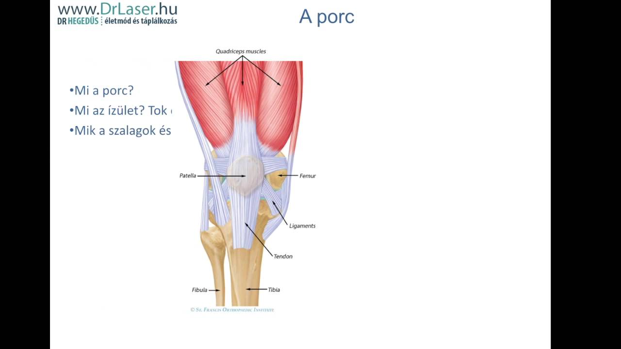 a porc személy kötőszövetének felépítése ízületi zömök fájdalom
