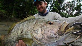 GEOBASS: PAPUA NEW GUINEA - PART 1