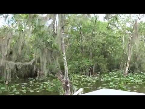 Reserva Seminole  Florida, USA.   - HD - Part  1