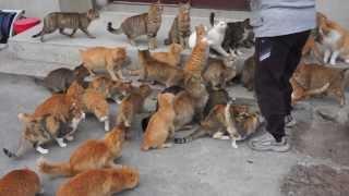 Paradise of cat 2