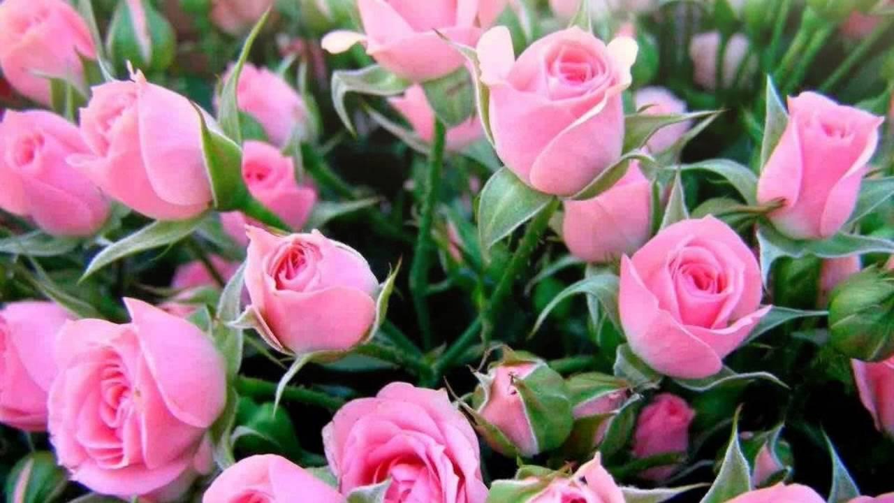 жилье с днем рождения картинки таня розы удачи, счастья