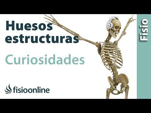 huesos---estructura,-funcionamiento-y-curiosidades