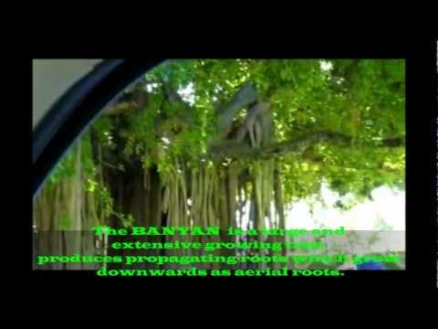 """Driving to the Botanical Gardens in Dominica (""""Bumpiing Tours"""" - December 27, 2011)"""