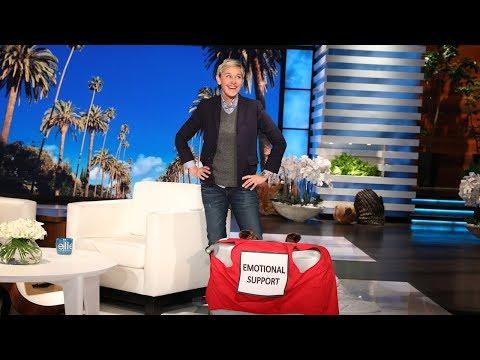 Ellen Presents New Emotional Support Luggage