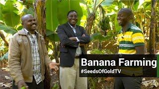 Bananas - Seeds Of Gold TV Season 1 Episode 11