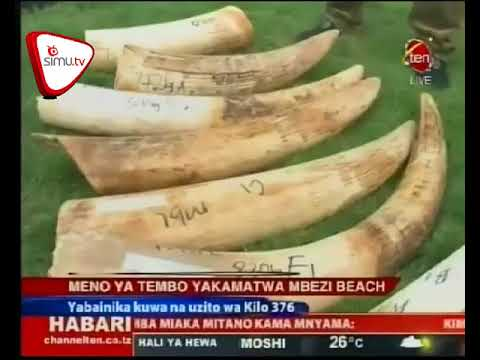 Meno Ya Tembo 28 Yakamatwa Jijini Dar es Salaam