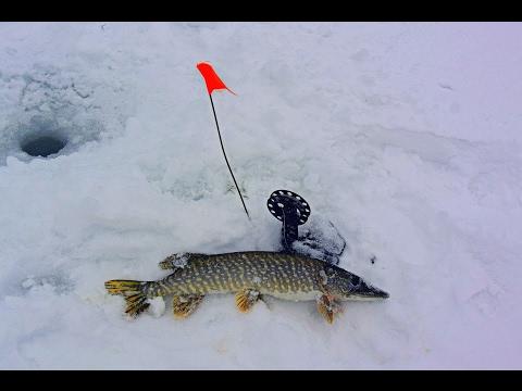 Ловля Щуки на Жерлицы Зимой  Рыбалка на Щуку в Глухозимье / Catching Pike on Live Bait in Winter смотреть онлайн