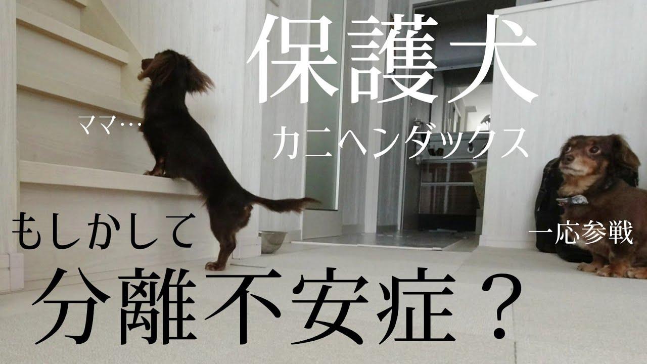 症 分離 犬 不安