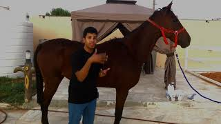 تعال شوف كيف تغير الحصان الضعيف خلال 10 ايام (جلمود) الحلقة الثانية