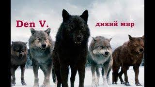В поисках людоеда. Нападения львов Nat Geo WILD HD #DenV.
