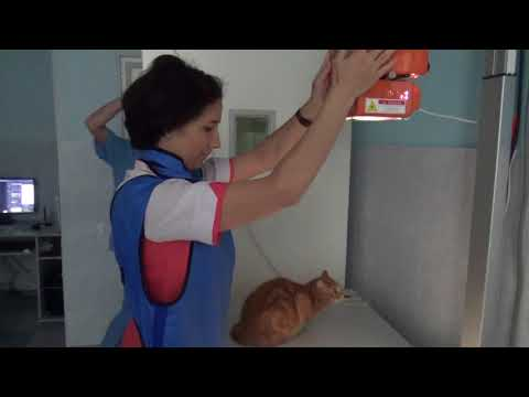 Как делают рентген кошкам