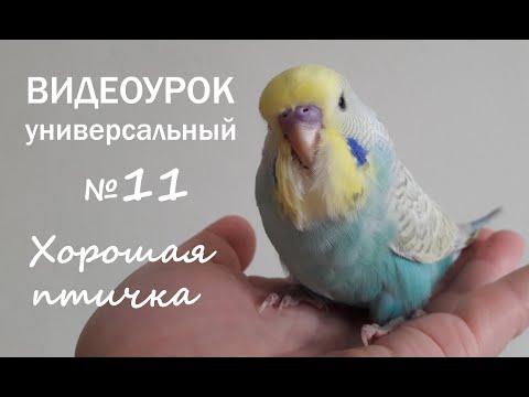 """🎧 Учим попугая говорить. Урок № 11: """"Хорошая птичка"""""""