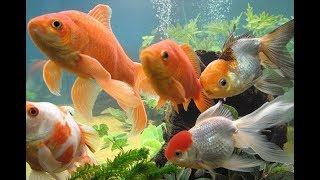 Benefits Of Keeping Aquarium एक व र यम क फ यद
