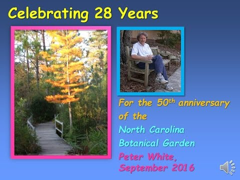 Celebrating 28 years by Peter White