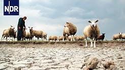 Wetter extrem - Zwischen Sturmflut und Dürre (1/3) | DIE REPORTAGE | NDR Doku