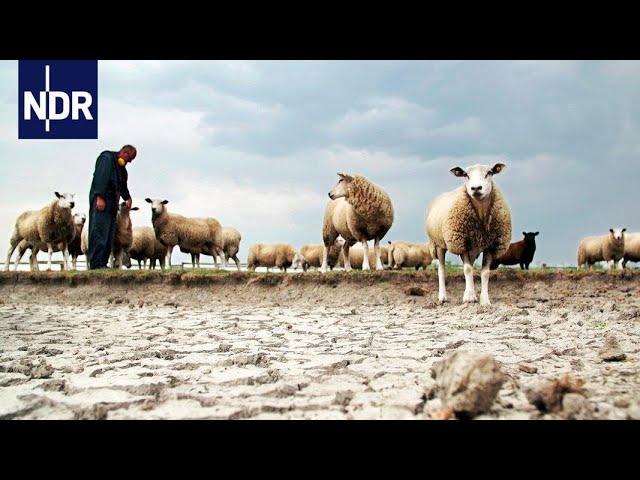 Wetter extrem - Zwischen Sturmflut und Dürre (1/3)   DIE REPORTAGE   NDR Doku