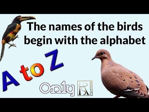 A To Z Birds Name | Birds Name Alphabet Starting (A To Z) | 2019 |