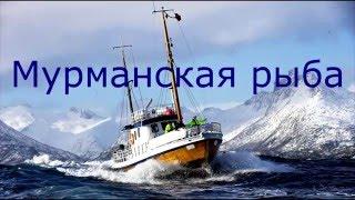 кАК РАЗДЕЛАТЬ СКУМБРИЮ. ВСЕ ПРОСТО  spasibozarybu.ru