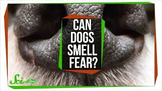 Can Dogs Smell Fear?