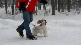 Kebec's Cocker Spaniels Winter Training