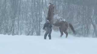 Cheval Sundance tres heureux dans la neige !!