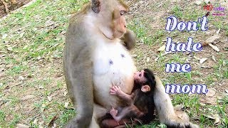 OMG-Poor baby monkey Toni just born-Why mom Tara act hate action her baby like this
