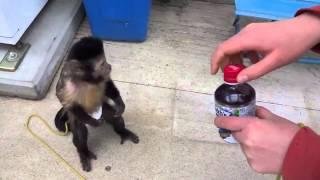 Смешная обезьяна покупает сок, кошки приколы картинки с надписями
