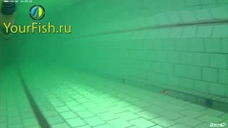 Yo-Zuri 3D Flat Crank in the water