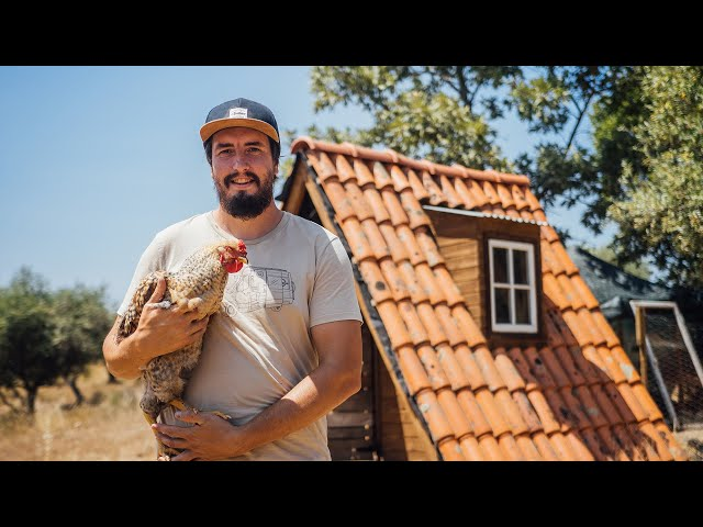Rehoming Our Chickens - Life Off Grid in Central Portugal