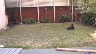 白しま子猫と黒しま子猫、実はもう子猫と呼ぶには大きくなりすぎるほど...