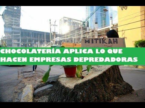 Vecinos De Xoco, Benito Juárez #CDMX Denuncian Nueva Tala