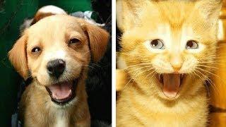 Лучшие приколы про собак и кошек | Подборка видео приколов про милых котиков и собак #3