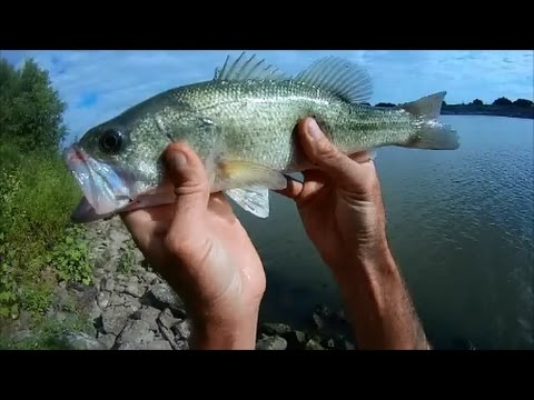 Bass Fishing Mississippi River #5